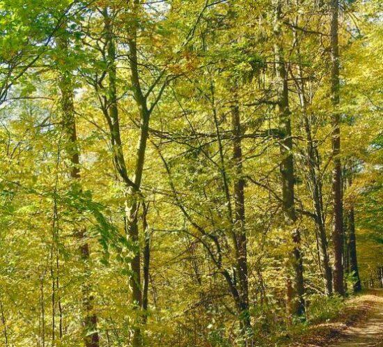 Skogslandskap.